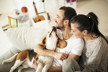 Animais de estimação promovem a interação social