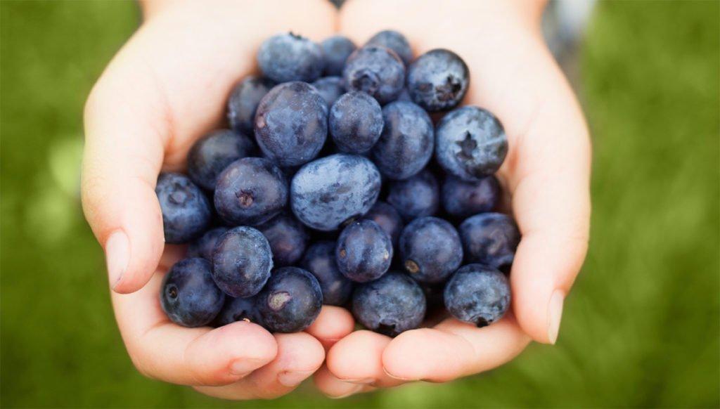 qualidade de vida - blueberry